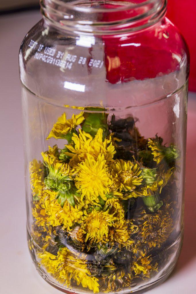 dandelion flowers in jar